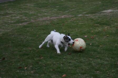 サッカーボールを追うもも(3)