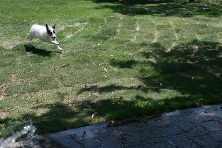庭中を走り回るもも