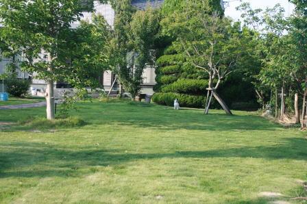 庭で訓練中のもも(1)