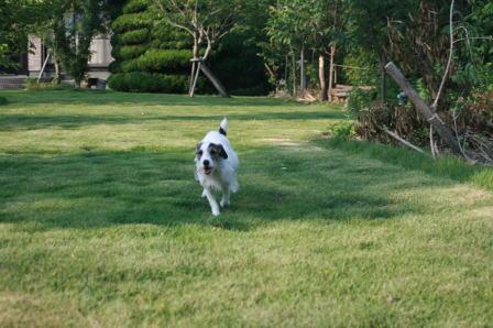 庭で訓練中のもも(3)