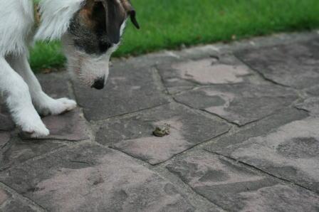 カエルを見つけたもも