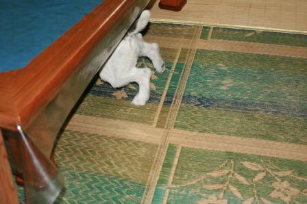 飯台の下に逃げ込むもも