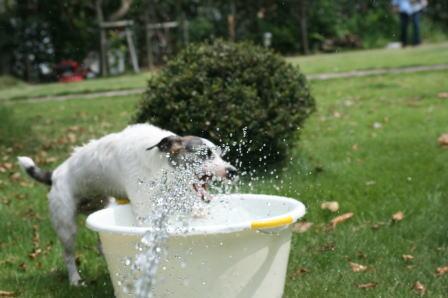 水遊び中のもも(3)