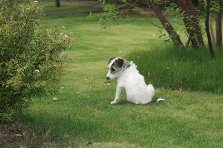 芝生に座りこんだもも(1)
