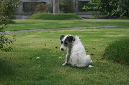 芝生に座りこんだもも(2)