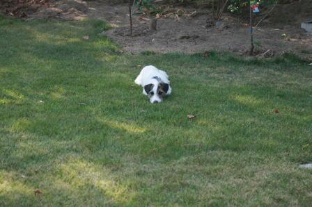 芝生の中で寝そべるもも