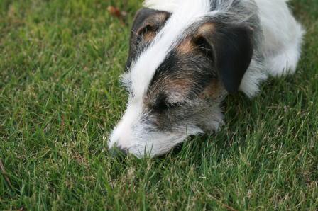芝生の上で眠ってしまったもも