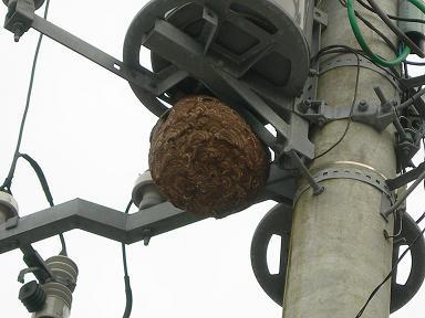 スズメ蜂の巣?