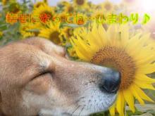 10022759946_s.jpeg