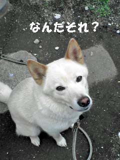 shiro0630.jpg