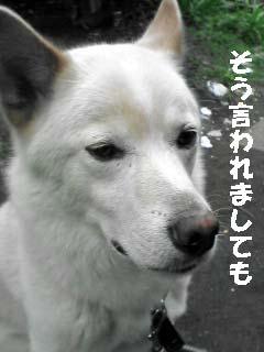 shiro06301.jpg