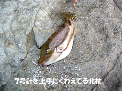 20061217kitamakura.jpg