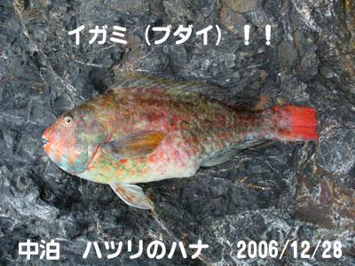 20061228igami.jpg