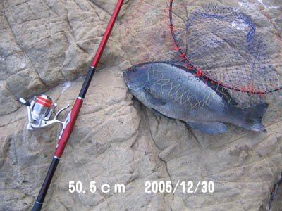 20061229gure50cm.jpg
