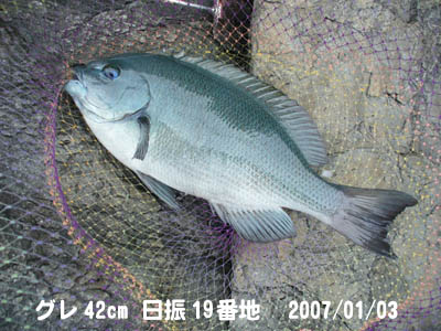 20070103gure42cm.jpg