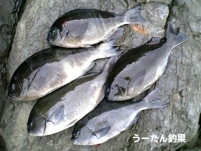 20070108u-tan_chouka.jpg
