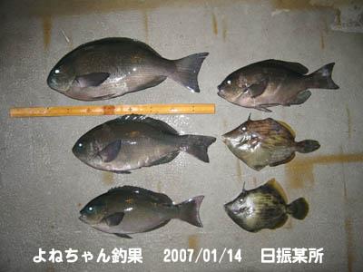 20070114yonechan_chouka.jpg