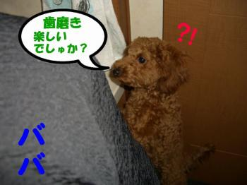 CIMG0075a1.jpg