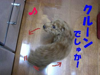 CIMG0398a1.jpg