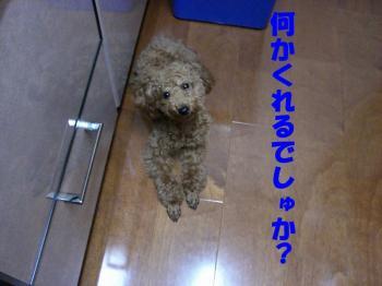 CIMG0417b2.jpg