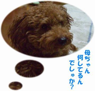 CIMG0596c.jpg