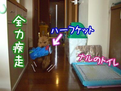 CIMG0850a.jpg
