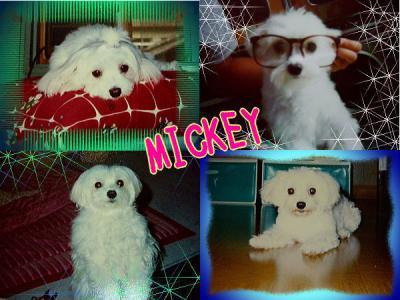 mickeydesu1.jpg