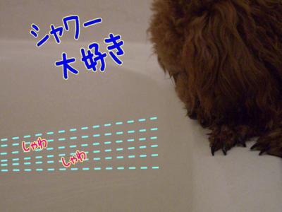 shawer1.jpg