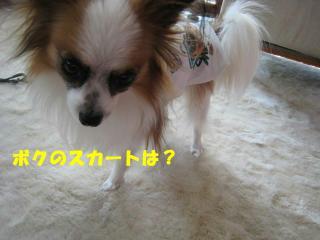 20070327113330.jpg
