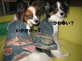 20071107213425.jpg