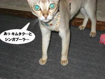 kimutakuto.jpg