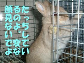 DSCF3797404.jpg