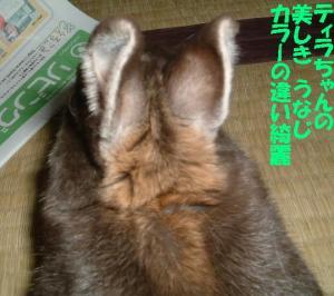 DSCF4079501.jpg