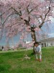 桜の下アイ
