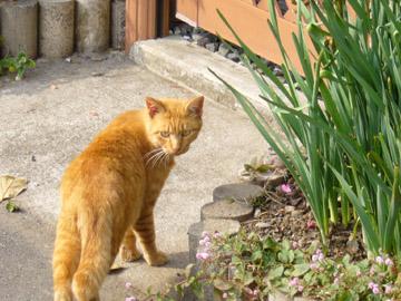 ふりかえる野良猫