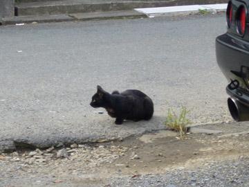 小さい黒猫