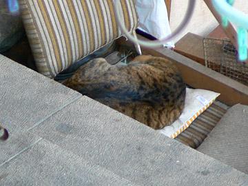橋の下付近のネコ