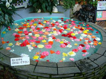 水流でベゴニアの花が回ります