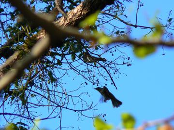 上を見上げると、鳥の姿が