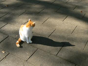 猫の影が、いい感じ