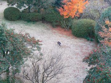 裏庭に鹿?