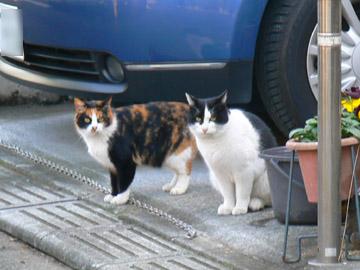 自動車のそばにネコが