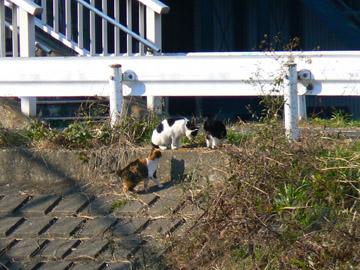 対岸でネコ集会