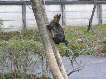 木登りにゃんこ