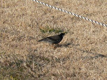 河原に小鳥