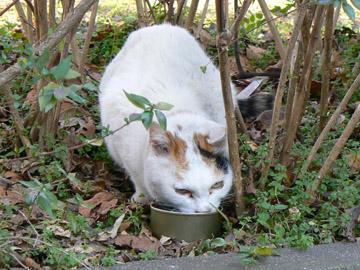 三毛猫です
