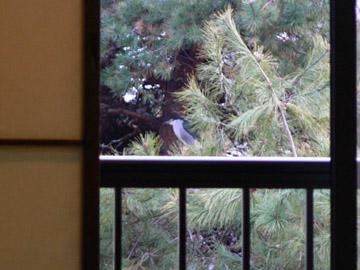 窓の外に鳥?