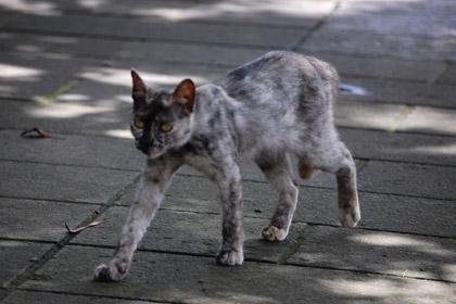 珍しい柄の猫