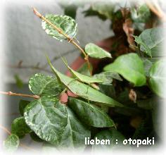 onbu-01