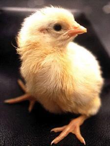 egg14.jpg